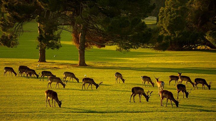 Animals In National Park Brijuni